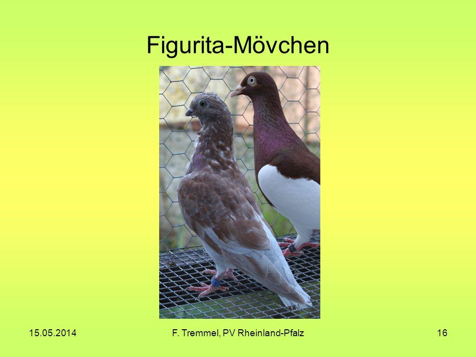 15.05.2014F. Tremmel, PV Rheinland-Pfalz16 Figurita-Mövchen