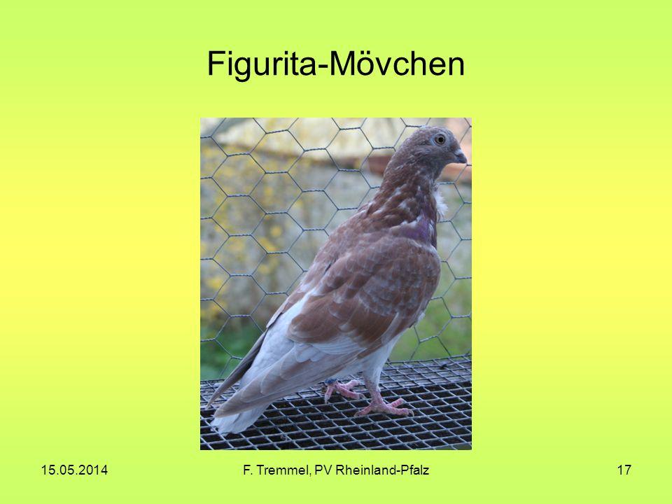 15.05.2014F. Tremmel, PV Rheinland-Pfalz17 Figurita-Mövchen