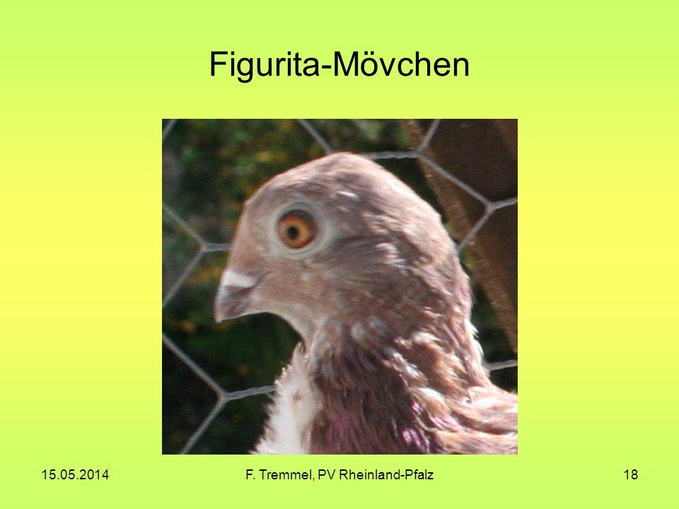 15.05.2014F. Tremmel, PV Rheinland-Pfalz18 Figurita-Mövchen