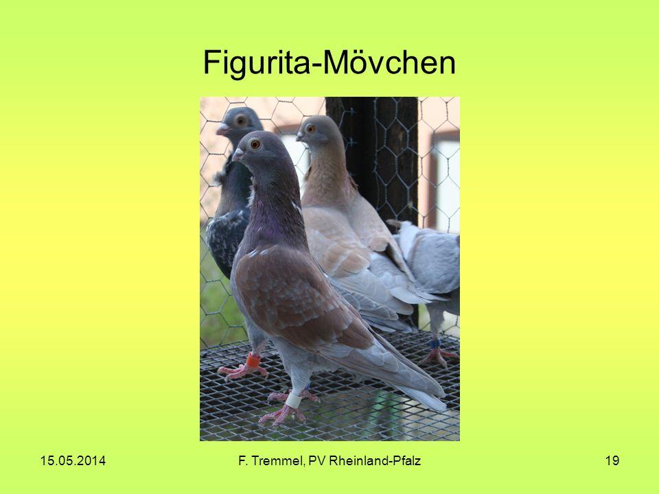 15.05.2014F. Tremmel, PV Rheinland-Pfalz19 Figurita-Mövchen