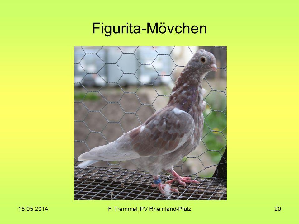 15.05.2014F. Tremmel, PV Rheinland-Pfalz20 Figurita-Mövchen