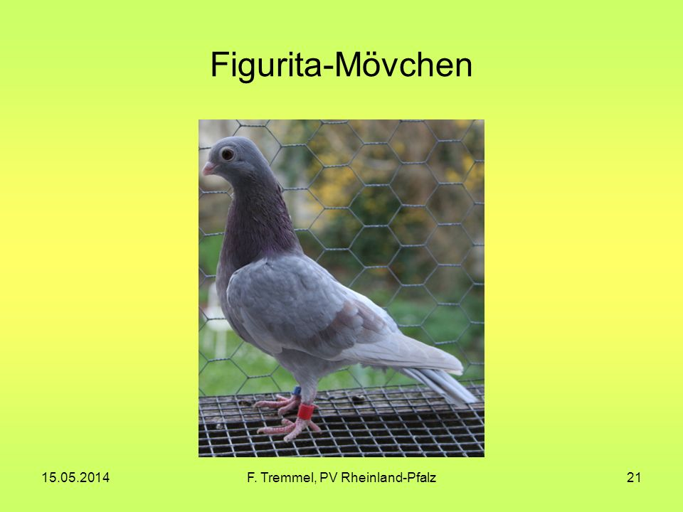 15.05.2014F. Tremmel, PV Rheinland-Pfalz21 Figurita-Mövchen
