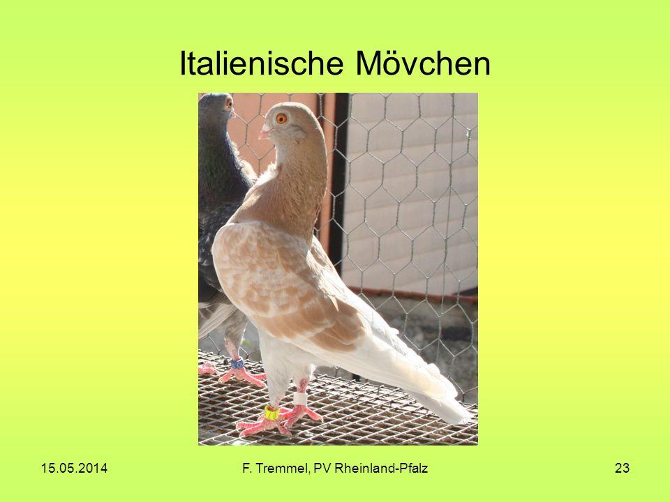 15.05.2014F. Tremmel, PV Rheinland-Pfalz23 Italienische Mövchen