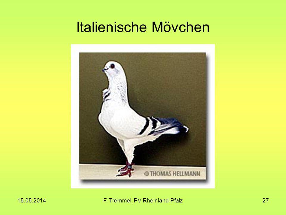 15.05.2014F. Tremmel, PV Rheinland-Pfalz27 Italienische Mövchen