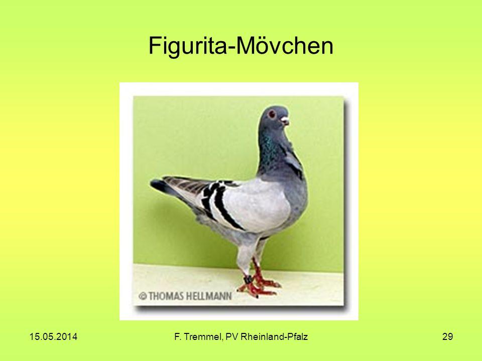 15.05.2014F. Tremmel, PV Rheinland-Pfalz29 Figurita-Mövchen