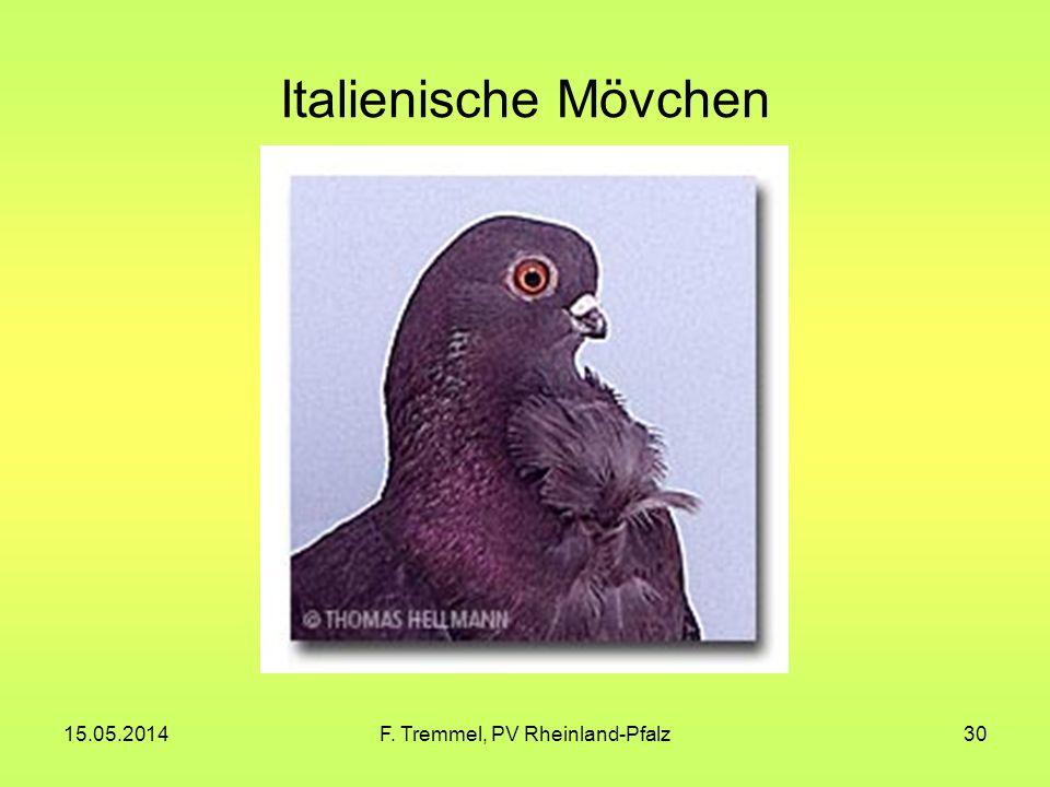 15.05.2014F. Tremmel, PV Rheinland-Pfalz30 Italienische Mövchen