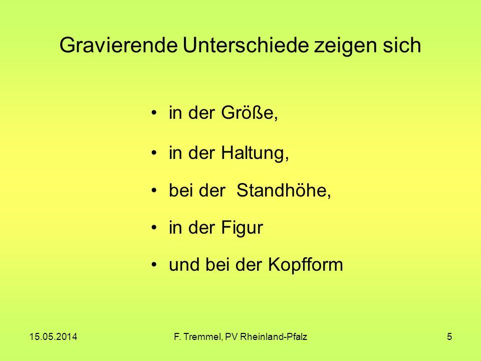 15.05.2014F. Tremmel, PV Rheinland-Pfalz26 Italienische Mövchen