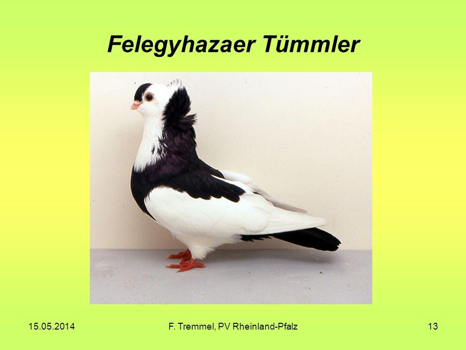 15.05.2014F. Tremmel, PV Rheinland-Pfalz13 Felegyhazaer Tümmler