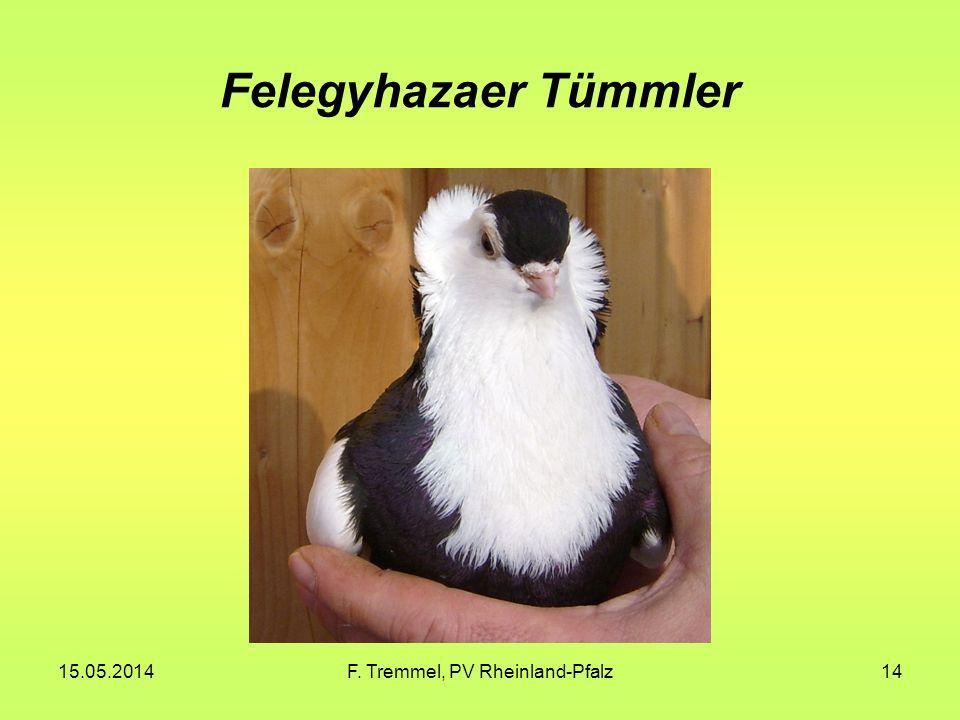 15.05.2014F. Tremmel, PV Rheinland-Pfalz14 Felegyhazaer Tümmler