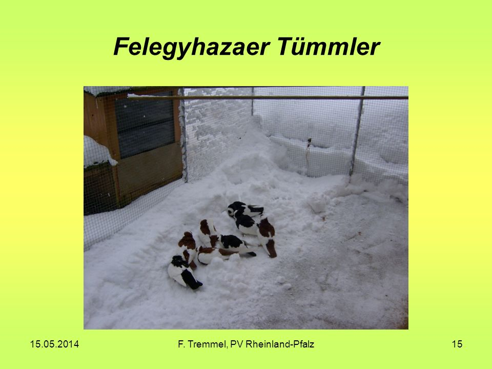 15.05.2014F. Tremmel, PV Rheinland-Pfalz15 Felegyhazaer Tümmler