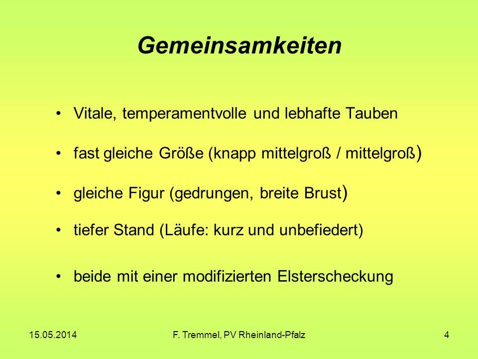 15.05.2014F. Tremmel, PV Rheinland-Pfalz4 Gemeinsamkeiten Vitale, temperamentvolle und lebhafte Tauben fast gleiche Größe (knapp mittelgroß / mittelgr