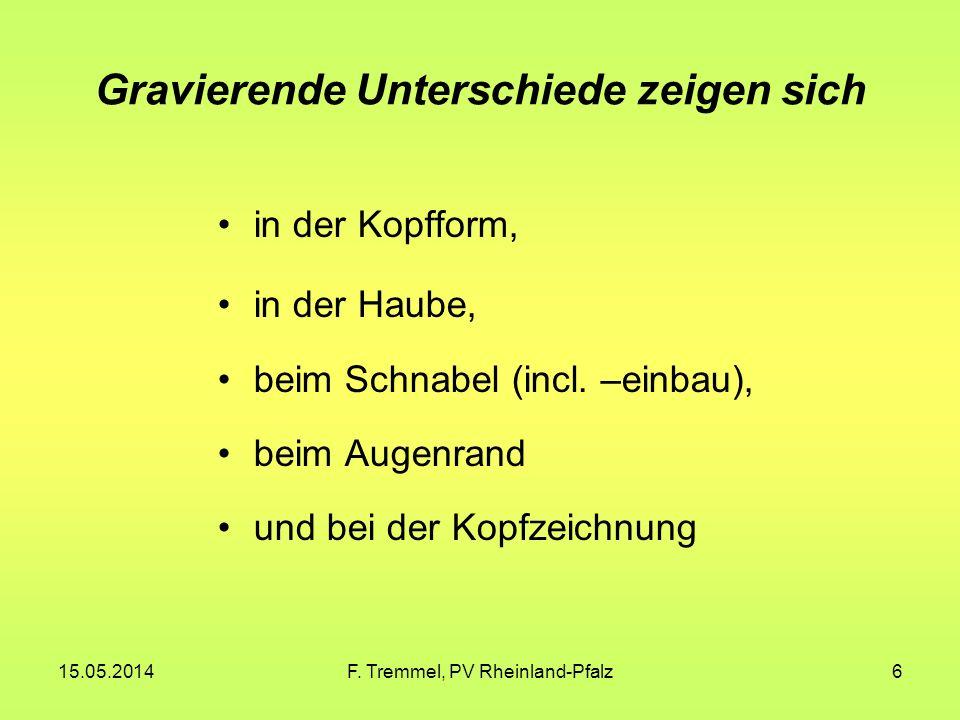 15.05.2014F. Tremmel, PV Rheinland-Pfalz6 Gravierende Unterschiede zeigen sich in der Kopfform, in der Haube, beim Schnabel (incl. –einbau), beim Auge