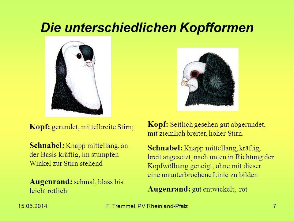 15.05.2014F. Tremmel, PV Rheinland-Pfalz7 Die unterschiedlichen Kopfformen Kopf: gerundet, mittelbreite Stirn; Schnabel: Knapp mittellang, an der Basi