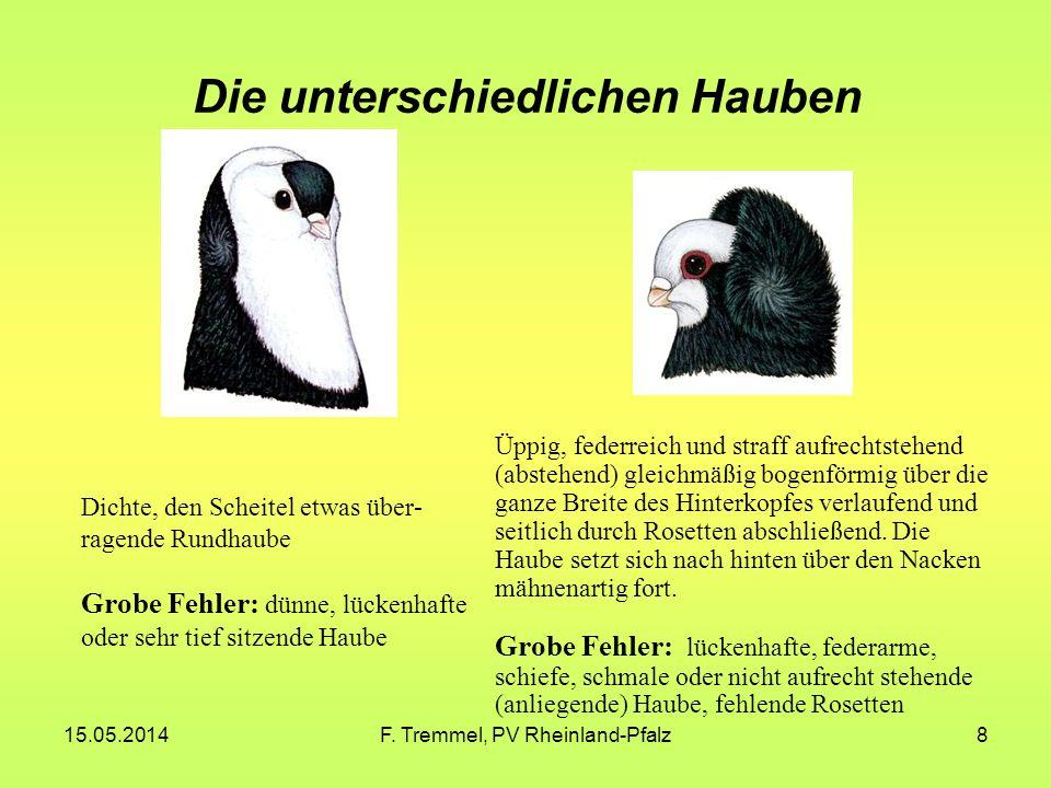 15.05.2014F. Tremmel, PV Rheinland-Pfalz19 Komorner Tümmler