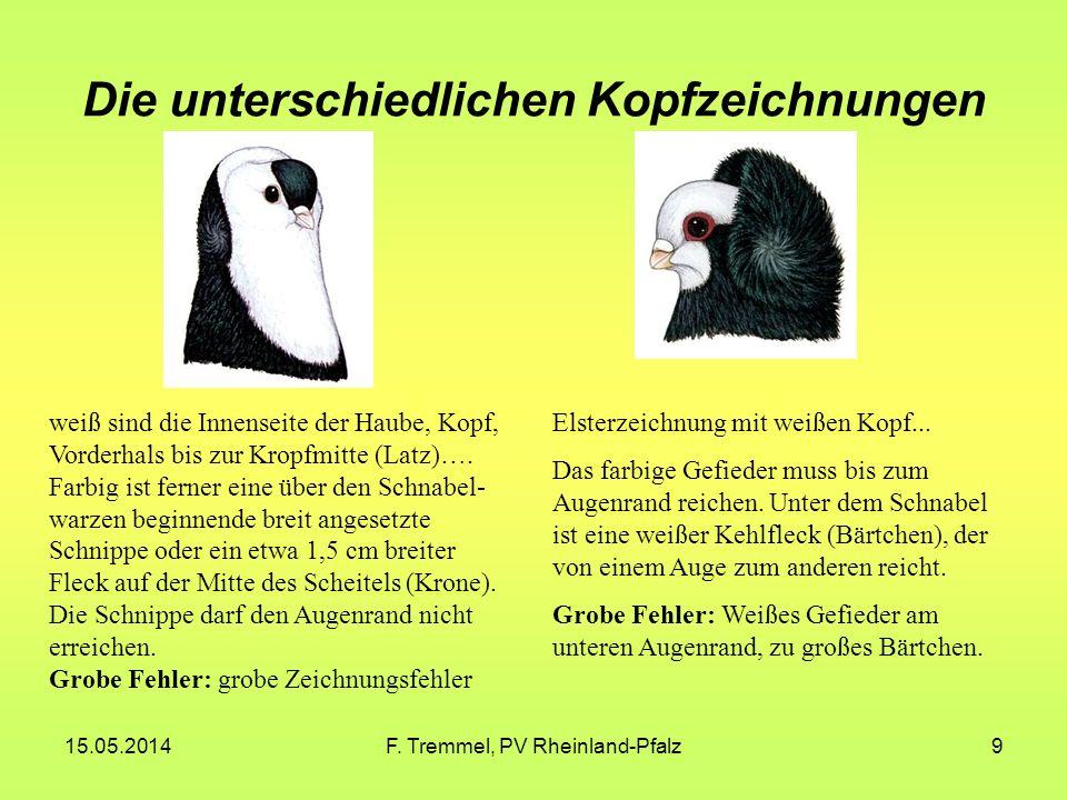 15.05.2014F. Tremmel, PV Rheinland-Pfalz9 Die unterschiedlichen Kopfzeichnungen weiß sind die Innenseite der Haube, Kopf, Vorderhals bis zur Kropfmitt