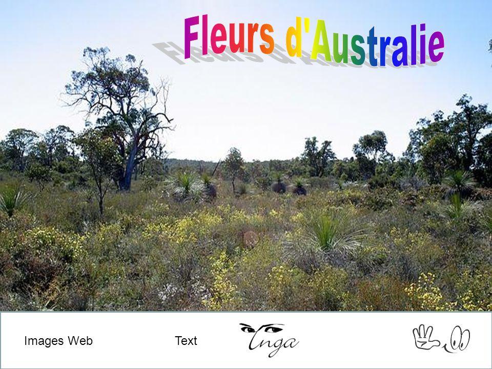 Photos et son du Web Text Images Web Text