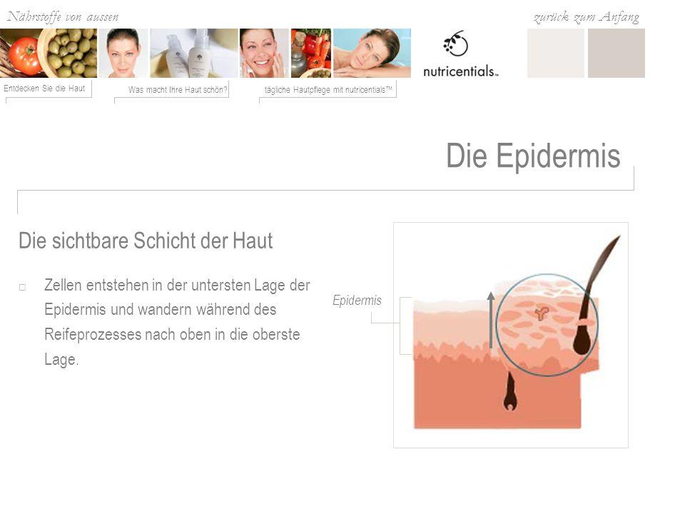 Nährstoffe von aussen Was macht Ihre Haut schön?tägliche Hautpflege mit nutricentials Entdecken Sie die Haut zurück zum Anfang Die Epidermis Dieser Prozess ist fortlaufend: die Hautzellen erneuern sich ca.