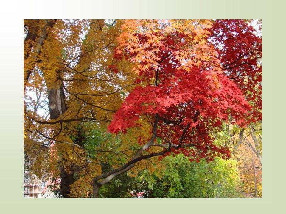 Abschied vom Sommer beim Spaziergang heut duftete der Weg nach Herbst der Sommer weint.