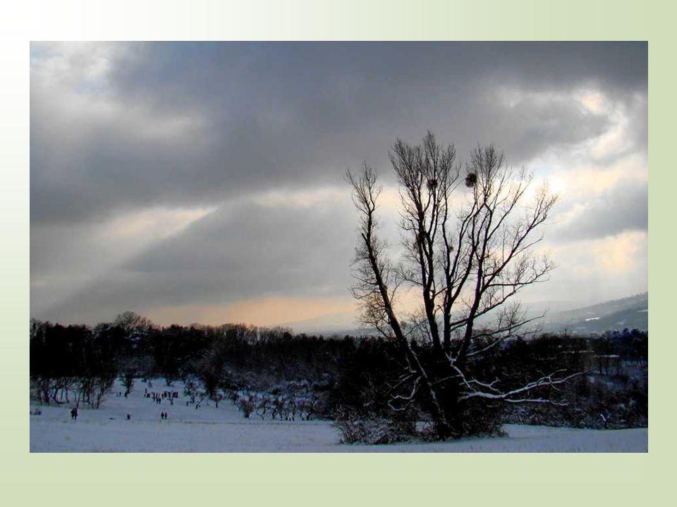 An die Bäume im Winter Gute Bäume, die ihr die starr entblätterten Arme Reckt zum Himmel und fleht wieder den Frühling herab.