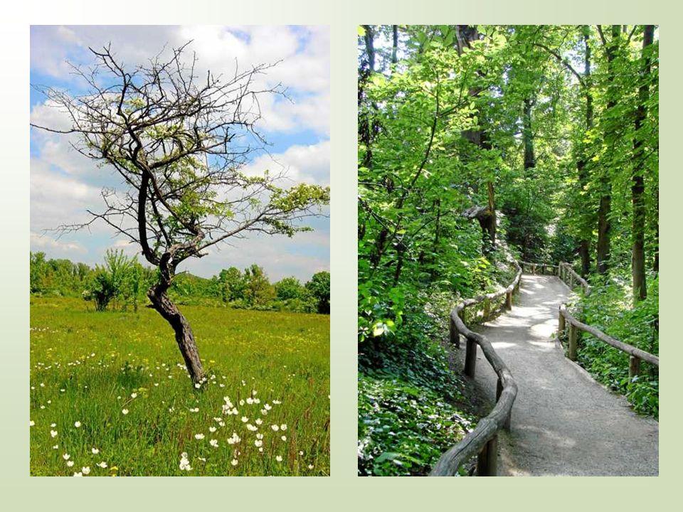 Wir sind alle Blätter an einem Baum, keines dem anderen ähnlich - das eine symmetrisch, das andere nicht, und doch gleich wichtig dem Ganzen.