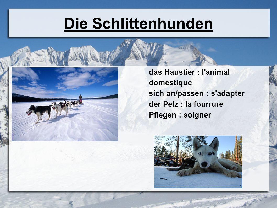 Die Schlittenhunden das Haustier : l'animal domestique sich an/passen : s'adapter der Pelz : la fourrure Pflegen : soigner