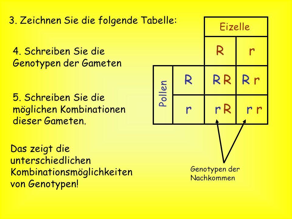 Das Punnett Square oder Punnett Quadrat Um Wahrscheinlichkeiten auszurechnen nutzen wir dasPunnett Square 1. Schreiben Sie die Genotypen auf. = Rr x R