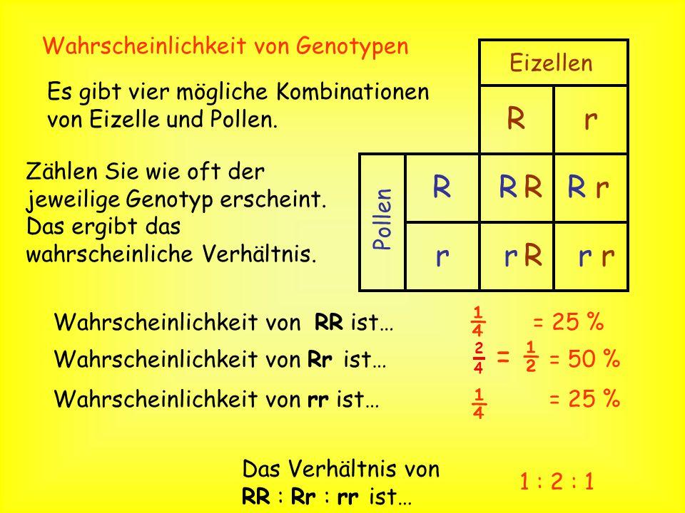 3. Zeichnen Sie die folgende Tabelle: 4. Schreiben Sie die Genotypen der Gameten 5. Schreiben Sie die möglichen Kombinationen dieser Gameten. Eizelle