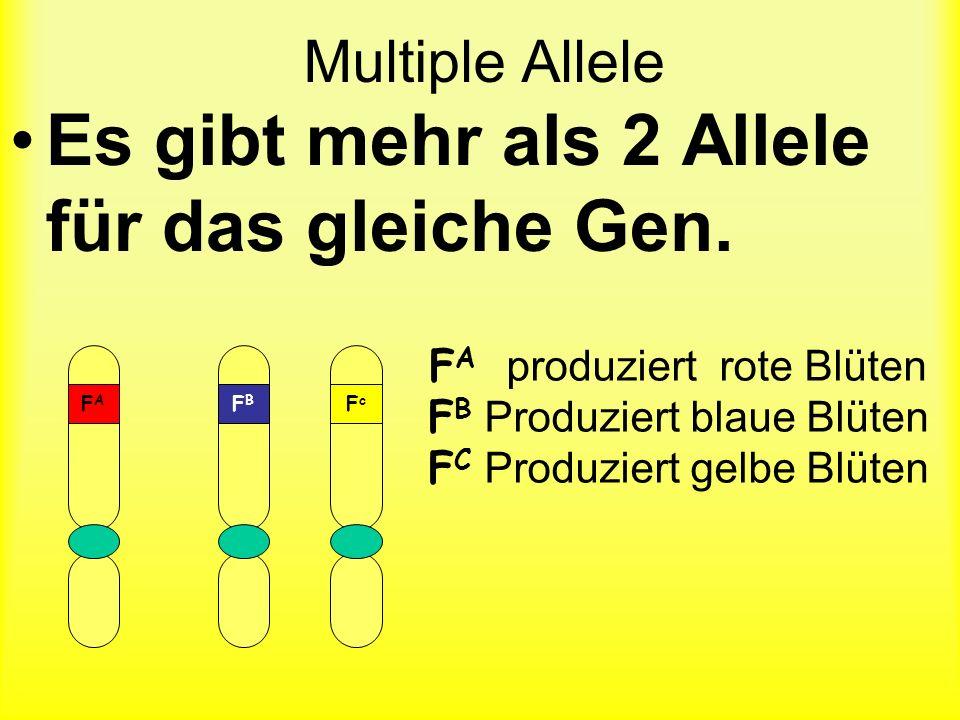 Eizellen Pollen Rr R r RRRr rRrr Wahrscheinlichkeit von Phänotypen Betrachten Sie die Genotypen …entscheiden Sie welche Phänotypen produziert werden.