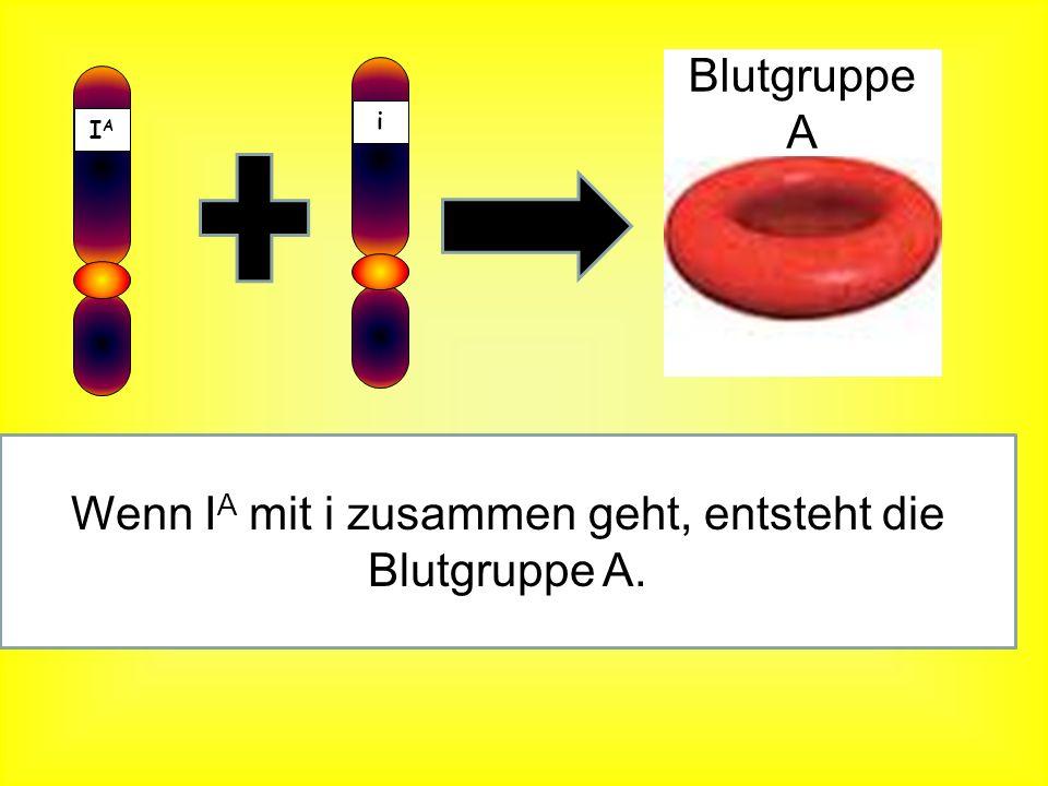 IAIA Wenn I A mit I A zusammen geht, entsteht die Blutgruppe A. IAIA Blutgruppe A