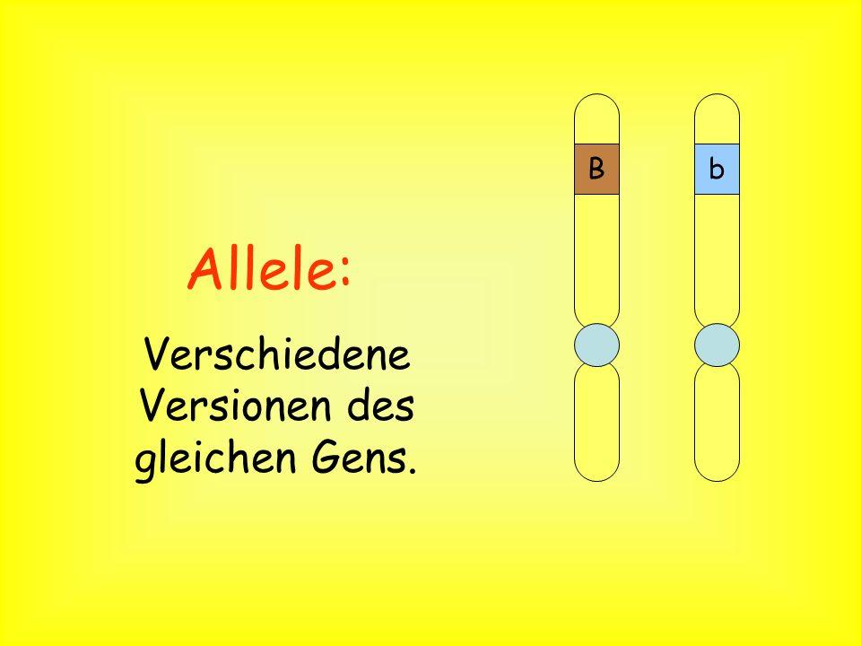 Chromosom Gene Chromosomen: Ein Bündel von DNA, welches viele Gene besitzt. B A C