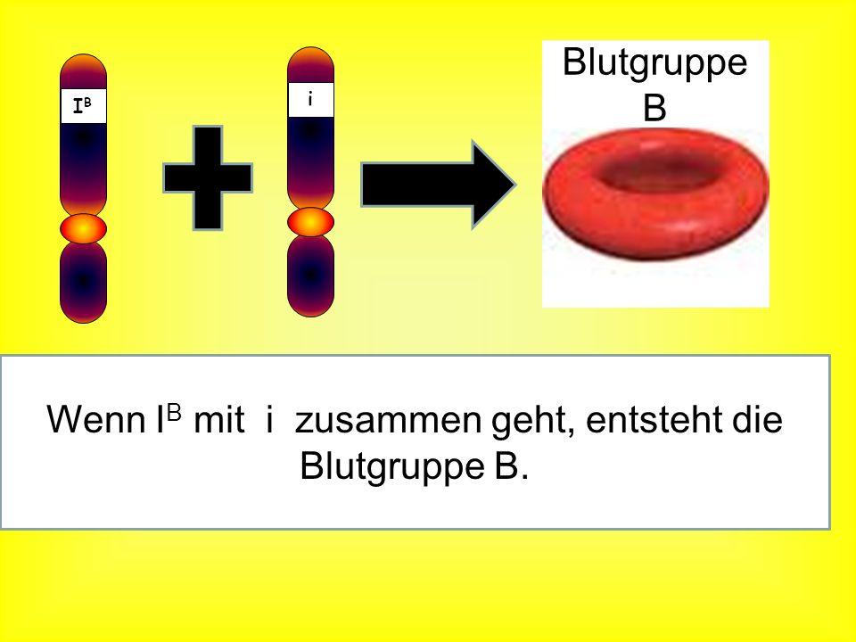 IBIB Wenn I B mit I B zusammen geht, entsteht die Blutgruppe B. IBIB Blutgruppe B