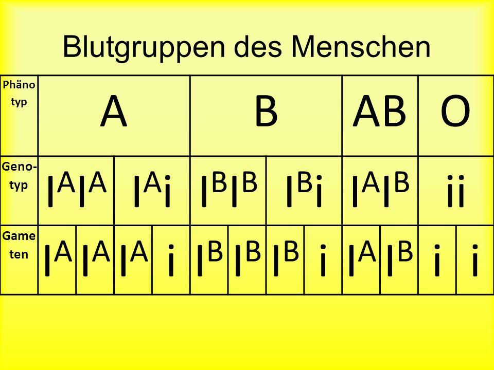 Multiple Allele Beispiel Blutgruppen: A, B, O Es gibt mehr als 2 Allele für das gleiche Protein. Bei Blutgruppen tritt dazu auf: Kodominanz – beide Al
