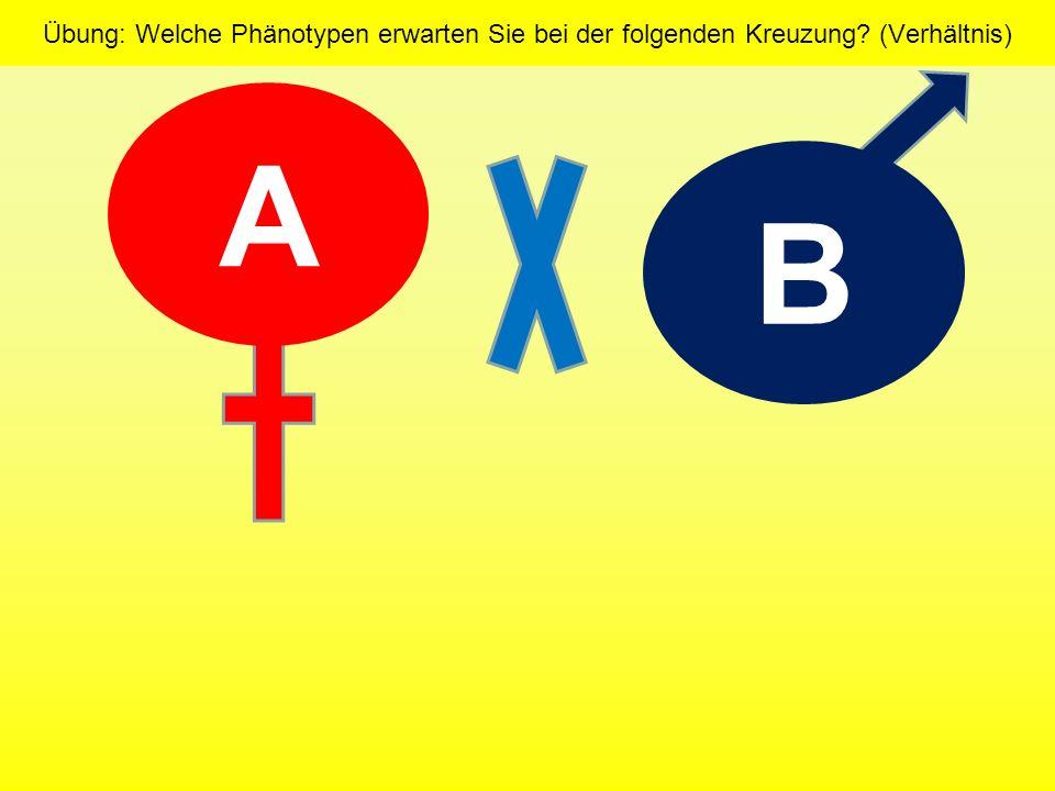 Übung: Welche Phänotypen erwarten Sie bei der folgenden Kreuzung? (Verhältnis)