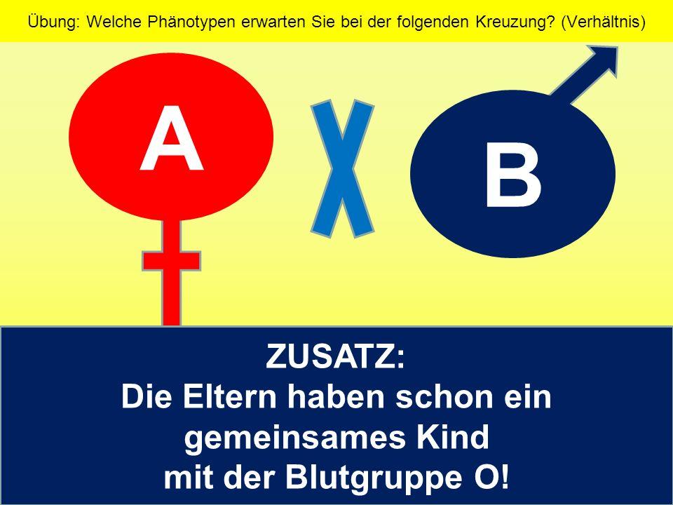 Phänotypverhältnis kann daher nur gegeben werden, wenn das Genotypverhältnis klar ist.
