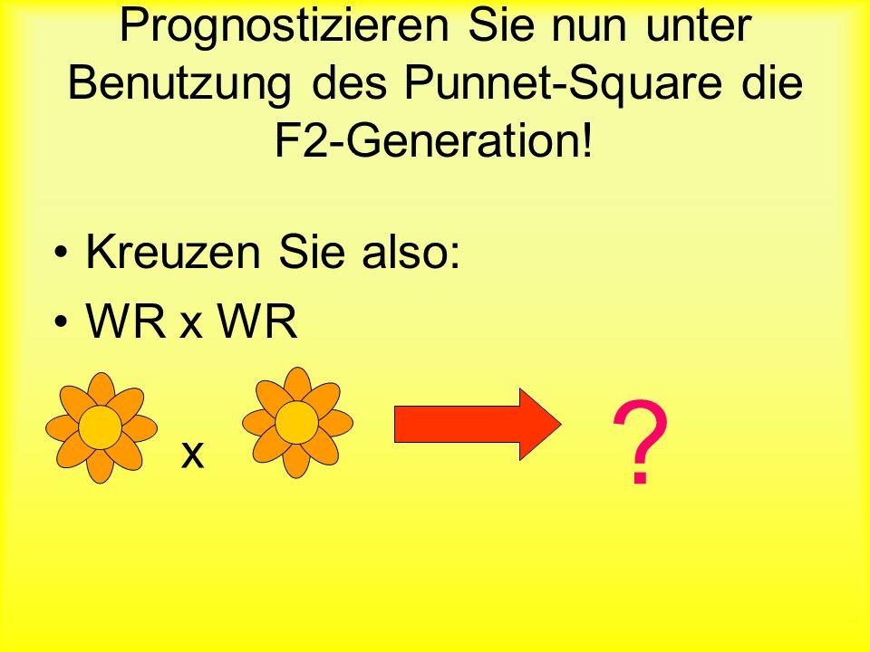 …aber es gibt noche eine andere Möglichkeit Blumen mit anderen Blüten zu produzieren… WR WR Daher, in der genetischen Kreuzung WW x RR … entstehen in