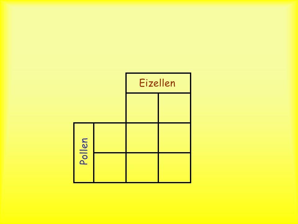 Prognostizieren Sie nun unter Benutzung des Punnet-Square die F2-Generation! Kreuzen Sie also: WR x WR x ?
