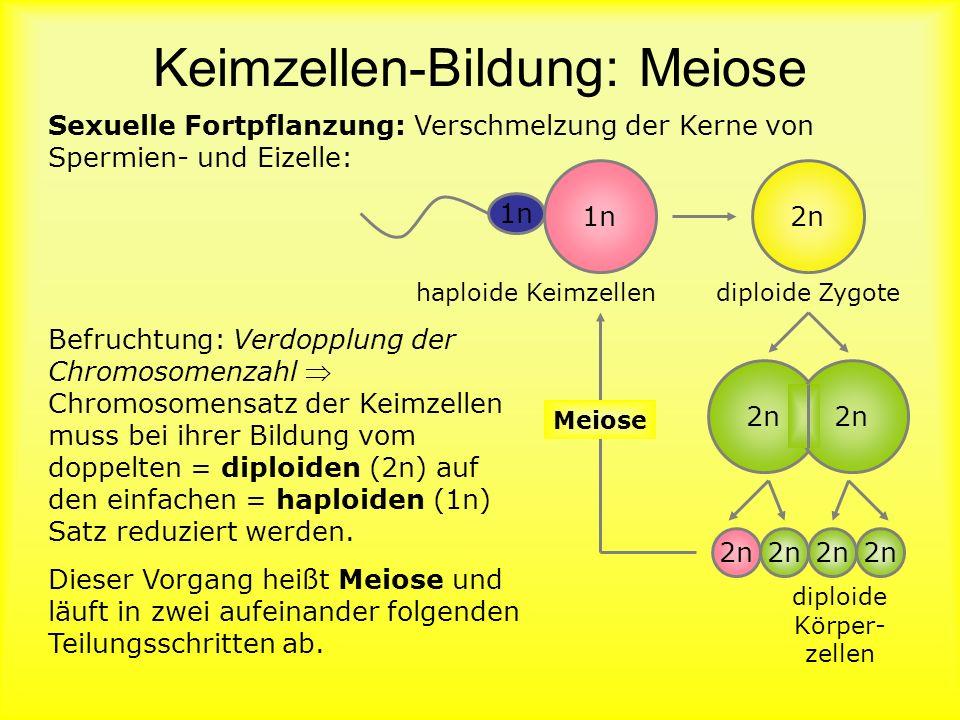 Karyogramm Frau Karyogramm: Menschlicher Chromosomensatz geordnet, weiblich