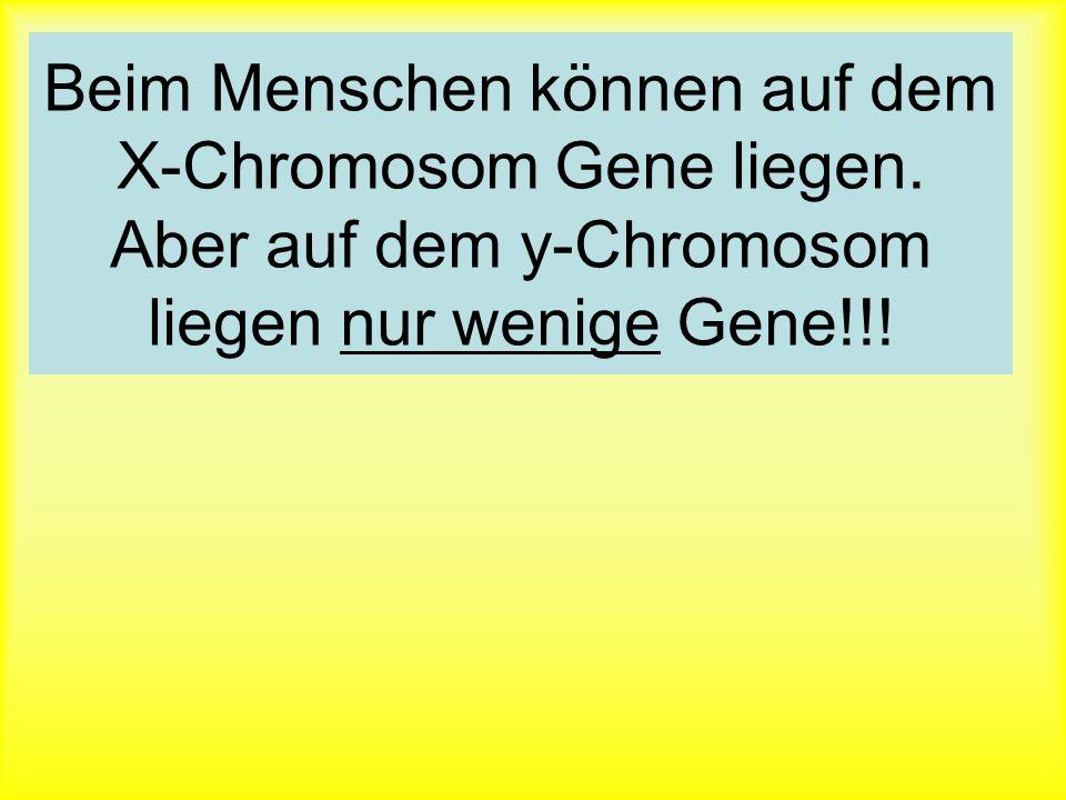 Vererbung des Geschlechts : ungleiches Chromosomenpaar XY : gleiches Chromosomenpaar XX XXXY Eltern XXXY Keimzellen XYXX Kinder