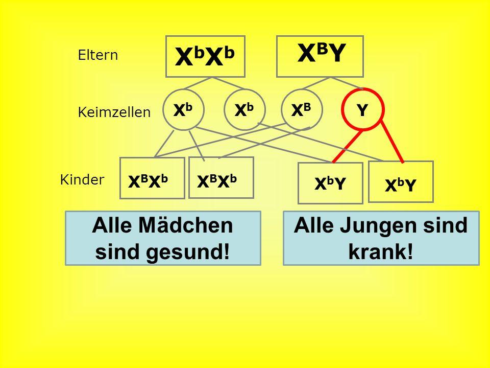 Geschlechtskopplung Gene liegen auf dem X-Chromosom. Das heißt, dass die Vererbung des Geschlechts mit diesen Genen gekoppelt (verbunden!) ist. XBXbXB