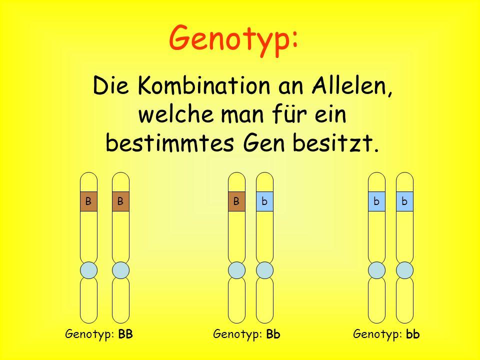 Definition Phänotyp sind die Merkmale eines Organismus ( blaue Augen).