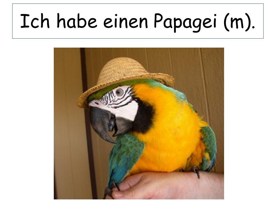 Ich habe einen Papagei (m).