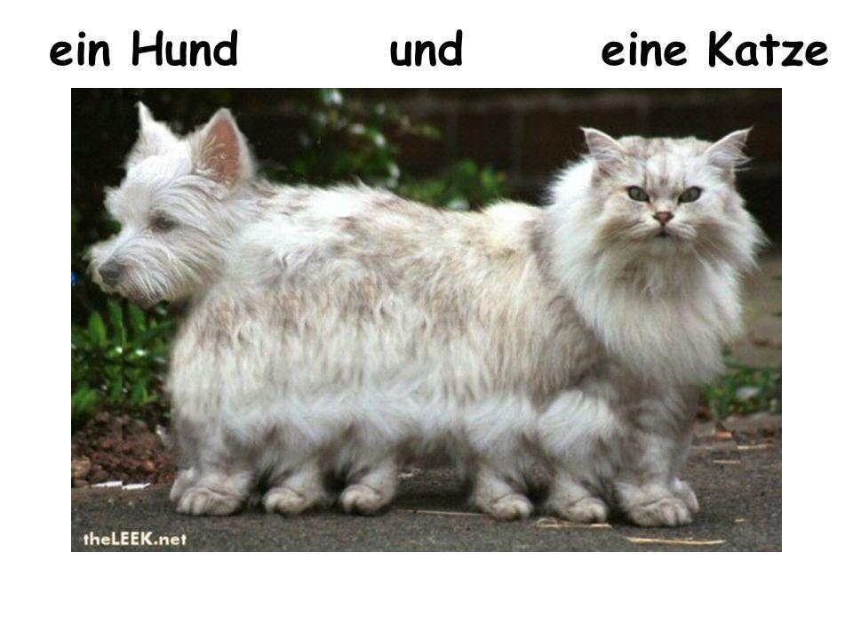 ein Hundundeine Katze
