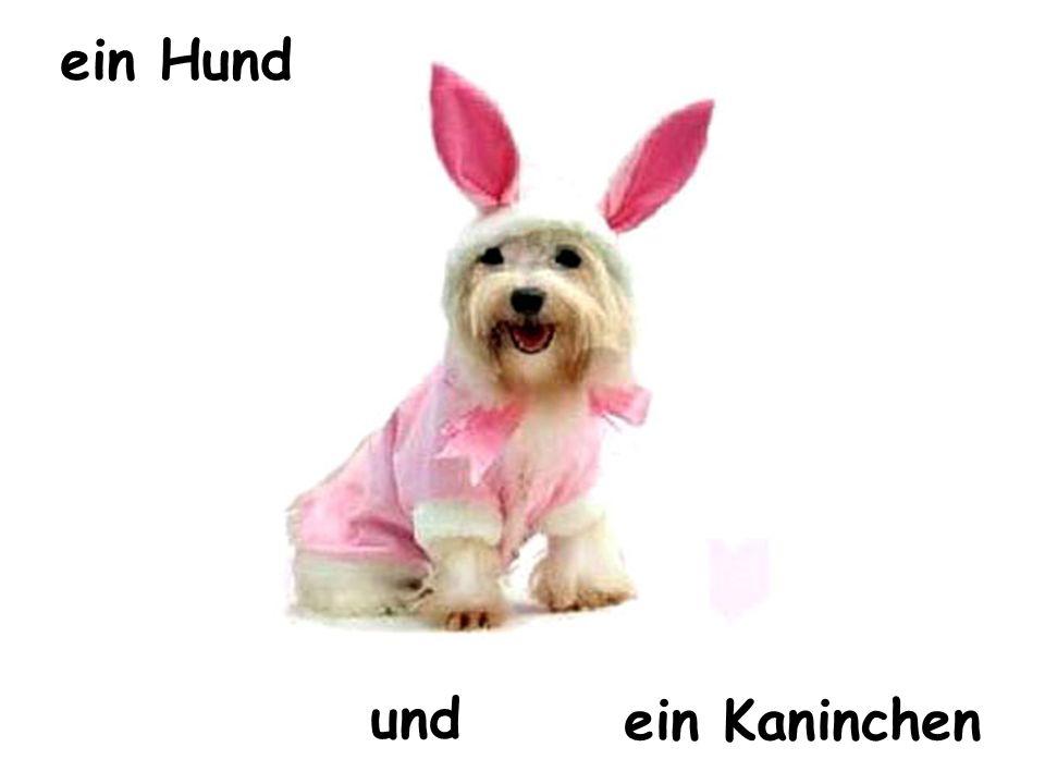 und ein Kaninchen