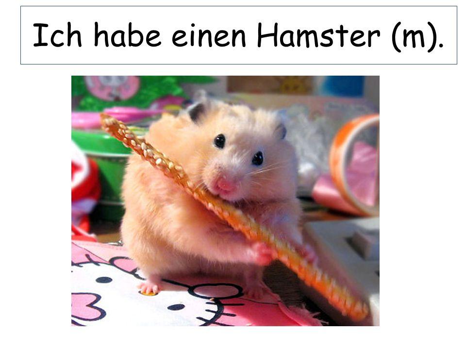 Ich habe einen Hamster (m).
