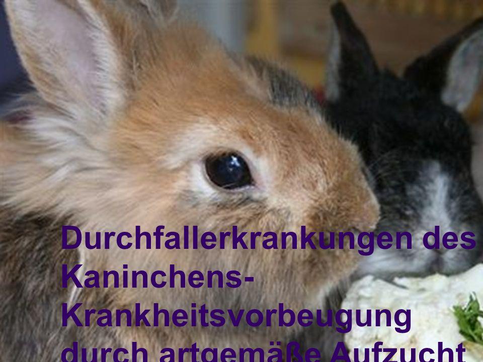 Paulus, LV-Referent für Schulungen Problem: höhere Todesrate bei Kaninchen gegenüber anderen Nutztierrassen Verluste in gewerblichen Kaninchenhaltungen während Säugeperiode bis Absetzen:15,4 % bis zur 12.