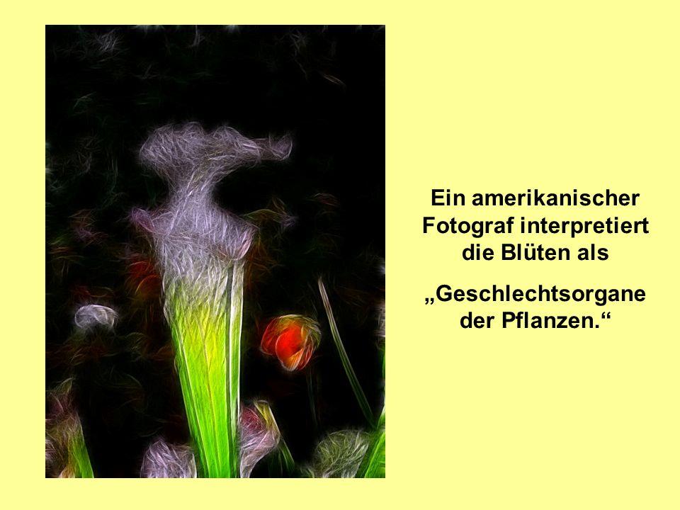 Ein amerikanischer Fotograf interpretiert die Blüten als Geschlechtsorgane der Pflanzen.