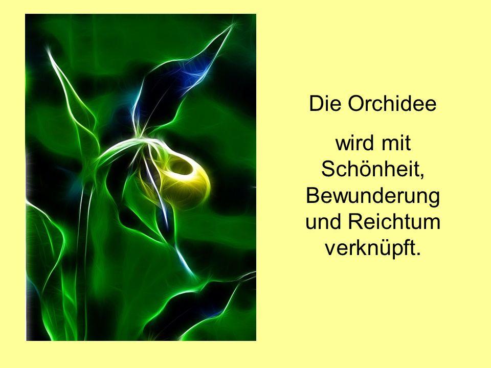 Die Orchidee wird mit Schönheit, Bewunderung und Reichtum verknüpft.