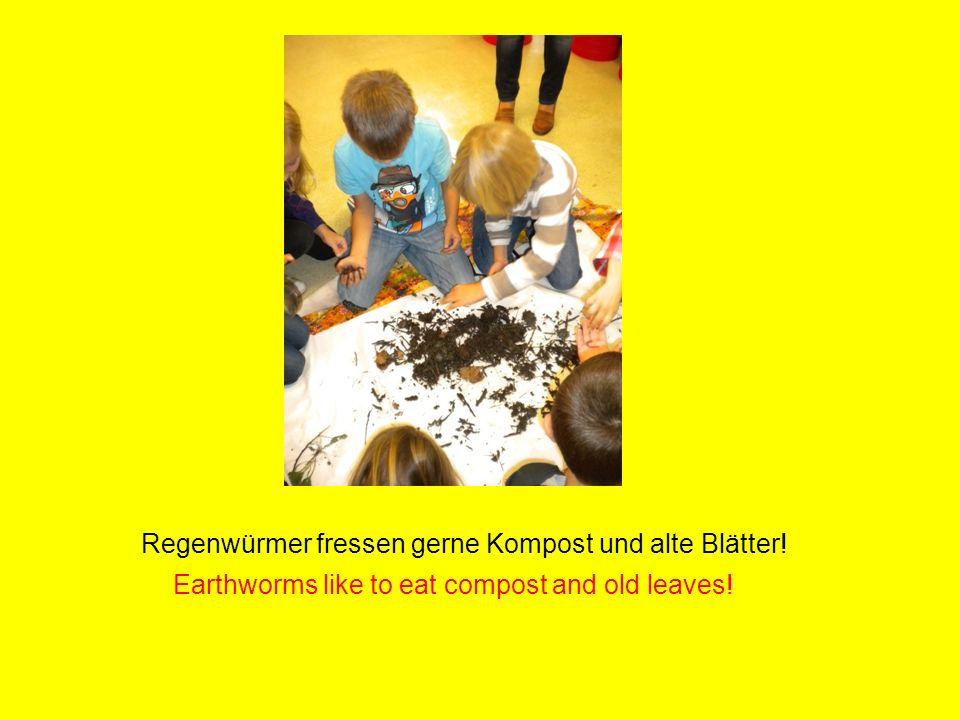 Wir haben mindestens hundert Regenwürmer gefunden! We found not less than one hundred earthworms!