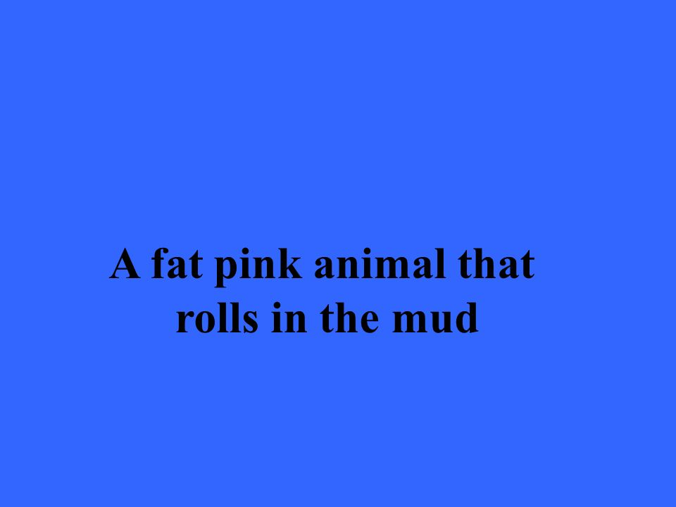 A fat pink animal that rolls in the mud