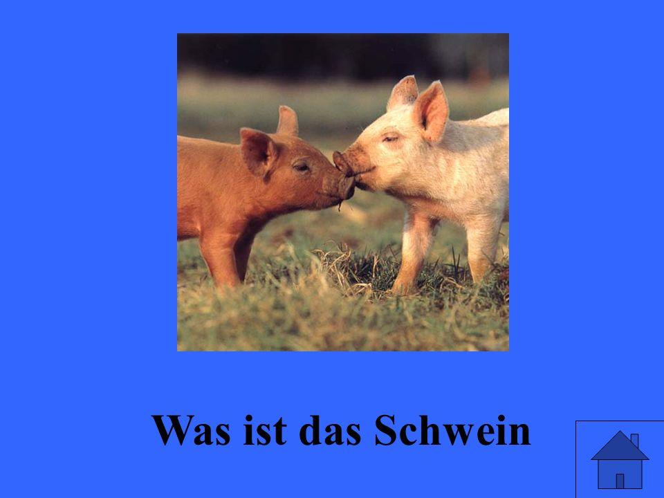 Was ist das Schwein